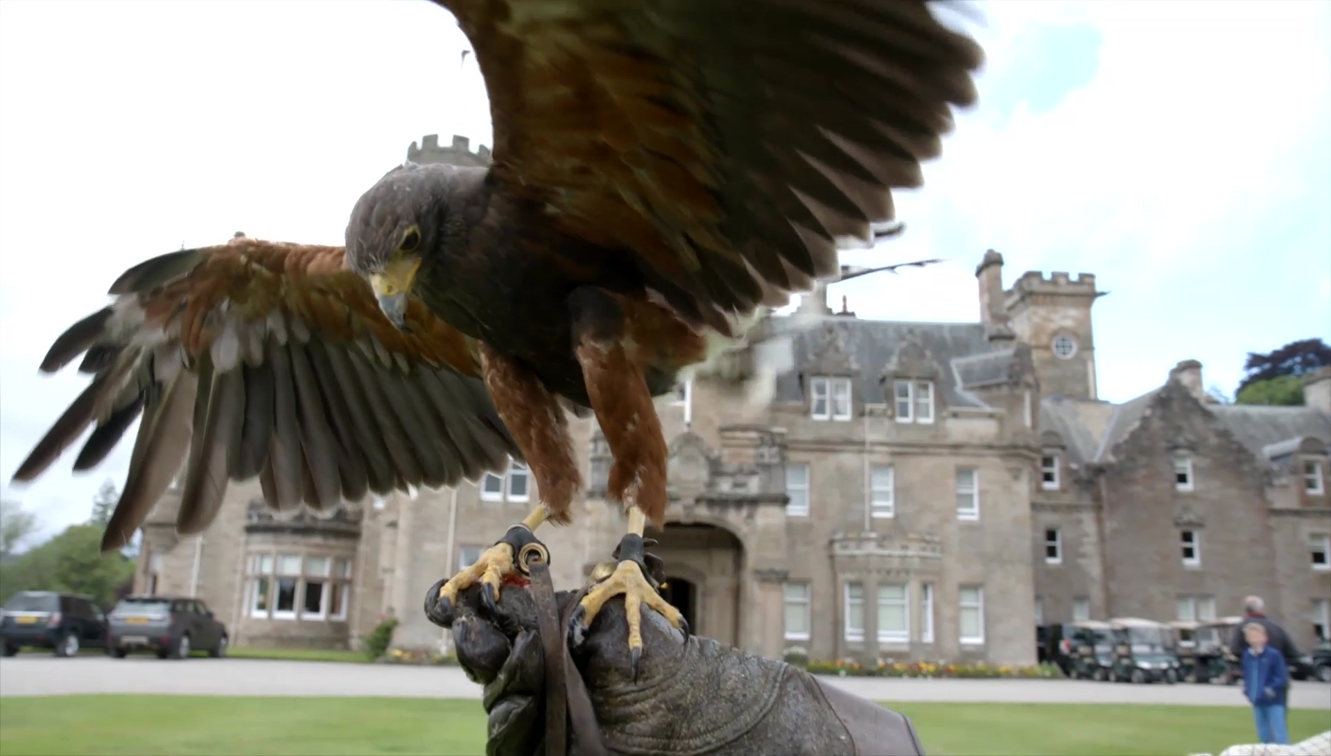 Falconry at Skibo